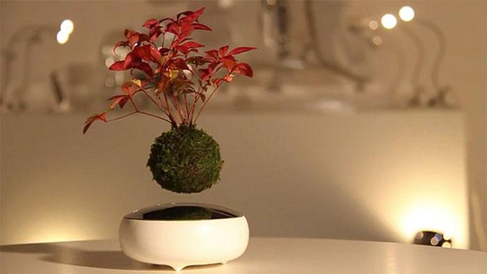 objets insolites bonsai
