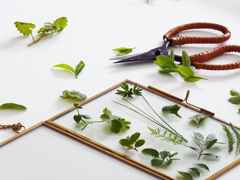 diy herbier suspendu 01 s