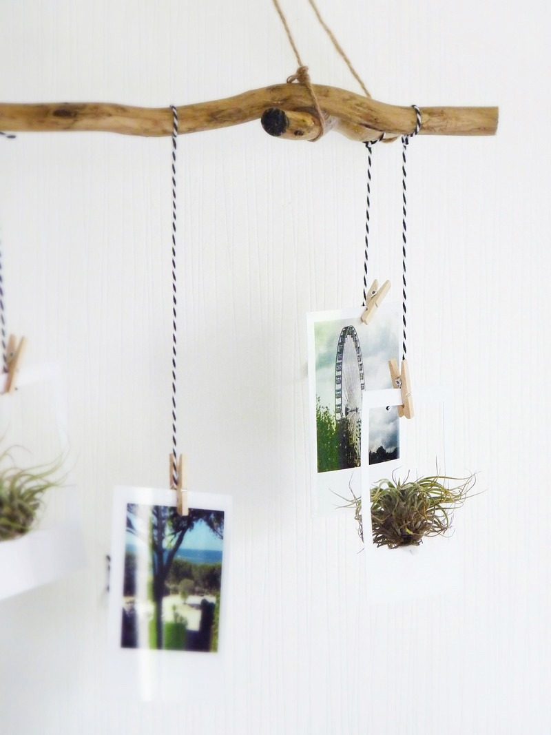 suspension pour polaroid air plant