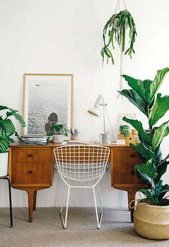 inviter la nature dans son bureau 6