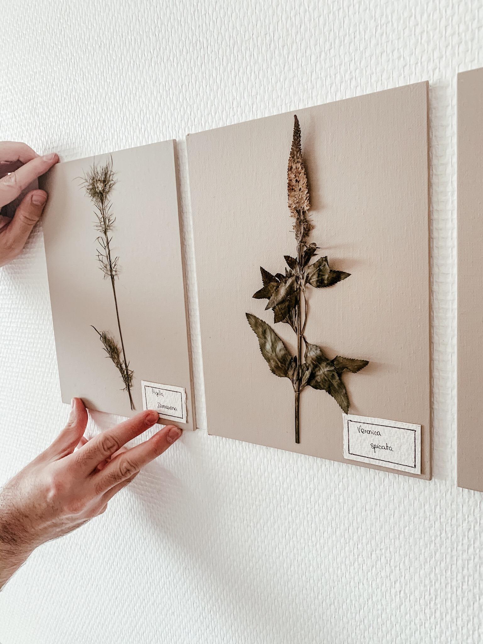 diy mur fleurs sechees 12